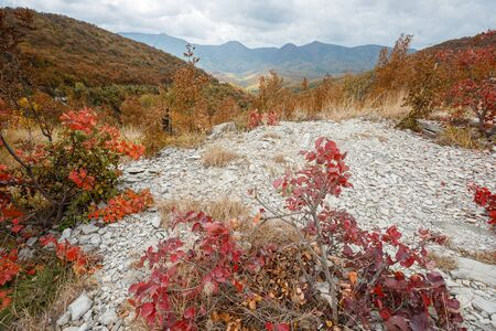 Colorful autumn landscape in the mountains. Stockfoto