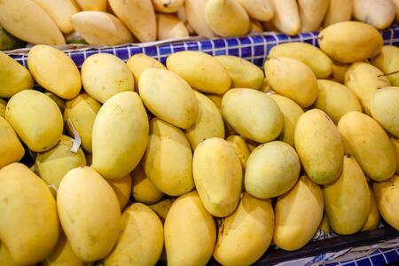 Fresh yellow mango pile on the fruit market stall. Bunch of tropical fruits. Ripe mango. Sweet dessert or raw vegetarian food. Exotic fruit in South Asia.