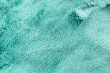 turquoise dyed rabbit fur Texture, animal skin background.