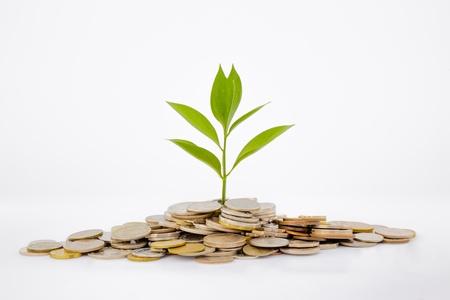 植物やコイン、通貨、投資とビジネスの概念