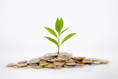 making money: plant and coins , currency, investment and business concepts Stock Photo