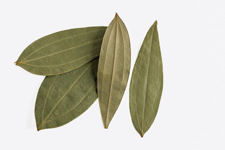 cinnamomum: dried Indian bay leaves or tejpatta on a white background