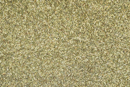 saunf: Top view of organic fennel seeds saunf Stock Photo