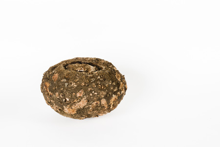 象の足山芋または jimikand におけるゾウコンニャク根塊茎野菜として使用 写真素材