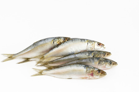 sardinas: Indian Oil Sardines (Sardinella longiceps) on a white background