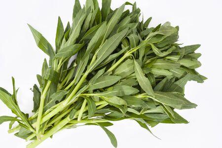 Sessile joyweed or Dwarf copperleaf or Ponnaganti aaku leaves (Alternanthera sessile) on a white background