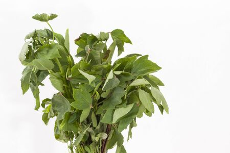 Bunch of Roselle or Gongura leaves (Hibiscus sabdariffa) leaves on a white background