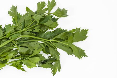 Bunch of Celery leaves (Apium graveolens) on a white background