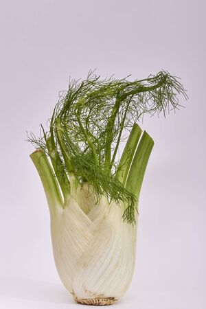 Single Fennel bulb on a white background