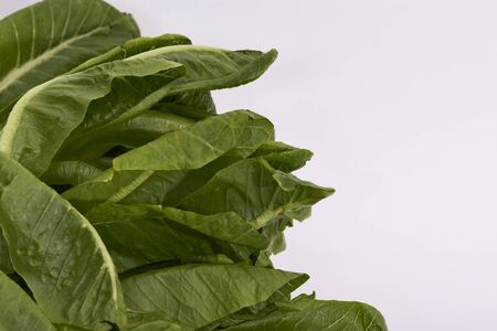 Romaine Lettuce leaves on a white background