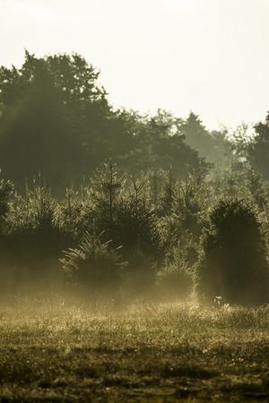 envelops: Early morning mist envelops a small Massachusetts farm.