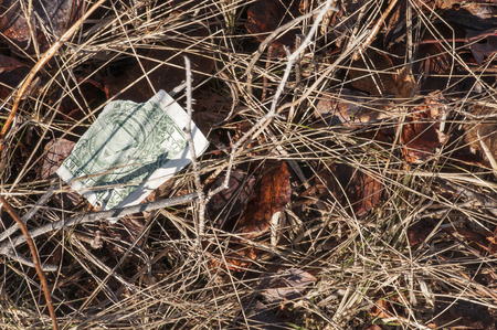 shred: Torn dollar bill not worth the pain of recovering it from brambles Stock Photo