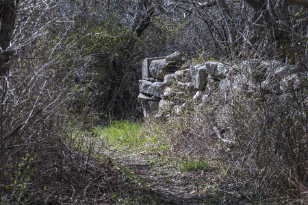 Old stone wall that once separated fields is now buried deep in woods