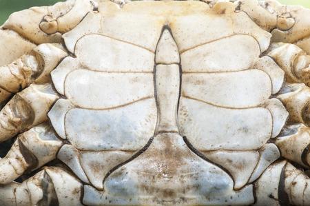 カニの殻の裏側に興味深いパターン 写真素材