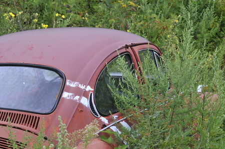 abandoned car: Abandoned car being overgrown by weeds