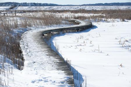 wintery snowy: Snow-covered marsh crossed by meandering boardwalk