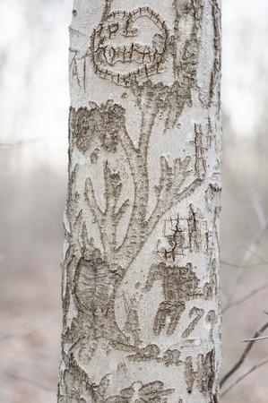 bark carving: Intricate carving on tree trunk in woods Stock Photo