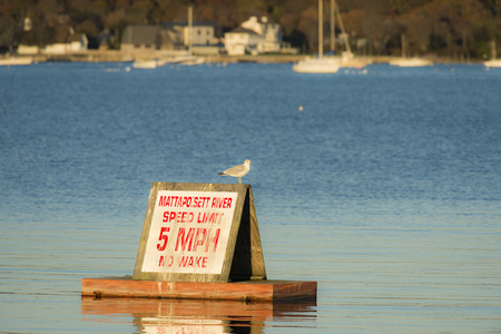 enforcing: Ring-billed gull seems to be enforcing the speed limit in the harbor Stock Photo