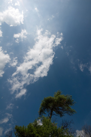 Clouds directly overhead