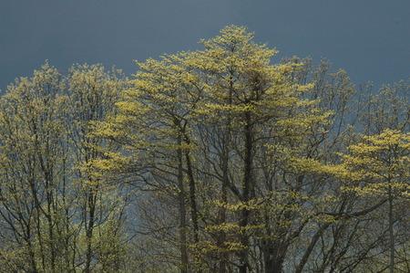 threatens: Dark sky threatens  to unleash a rainstorm