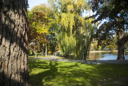 boston common: Srollers enjoy sunny fall day on Boston Common