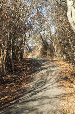 curving: Fallen leaves line dirt path curving through woods Stock Photo