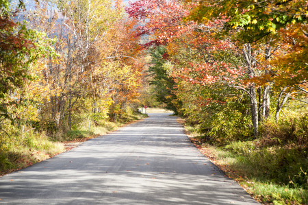 side of the road: Colorful autumn foliage along country side road