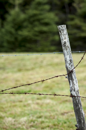 fencing wire: Barbed wire used to enclose New Hampshire field Stock Photo