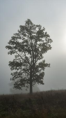 softens: Morning fog softens tree silhouette in Sherburne National Wildlife Refuge in Minnesota Stock Photo