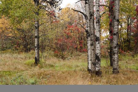 秋の午後に濡れた木のスタンド
