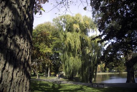 boston common: Boston Common still green in late fall while strollers take advantage of the crisp weather