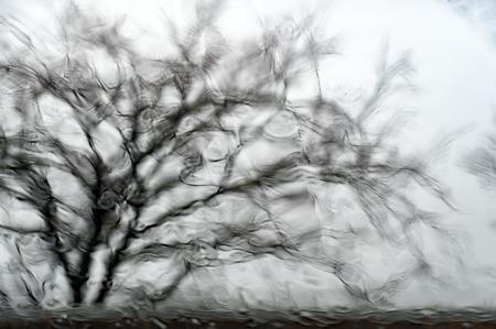 smears: Winter rain on window smears nearby tree Stock Photo