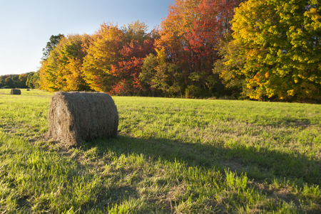 Bales of hay dotting New England field Stock fotó