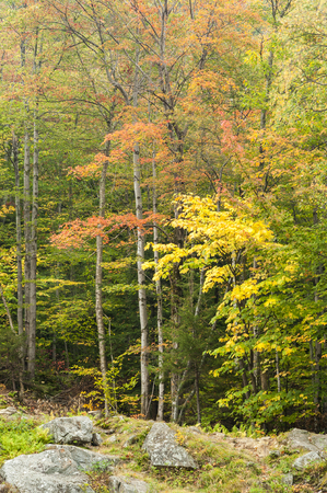 glows: Foliage glows on overcast day at Silver Cascade Falls