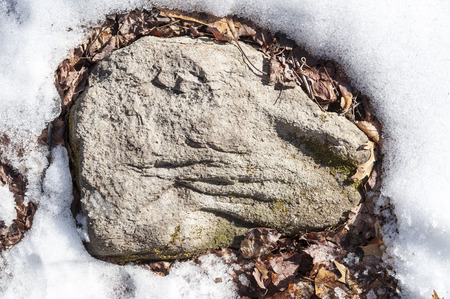 Grooved rock in snow resembles animal head