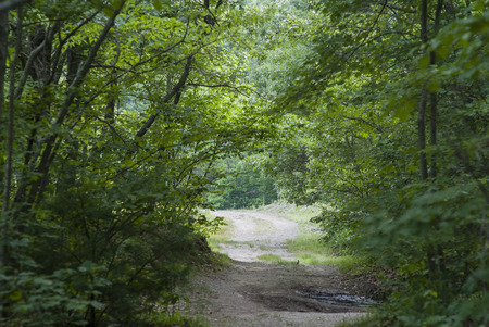 washed out: Washed out dirt road in woods makes for slow going Stock Photo