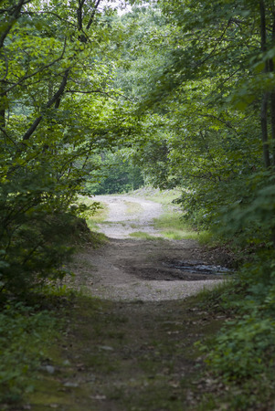 washed out: Washed out dirt road through woods makes for slow going Stock Photo