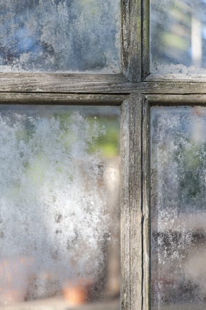 window panes: Weathered muntins and window panes on aging greenhouse