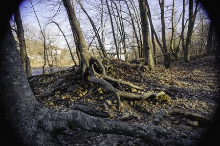 shorelines: Exposed tree roots along shoreline of Blackstone River in Rhode Island Stock Photo