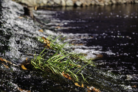 Weeds thriving in springtime cold water on small spillway