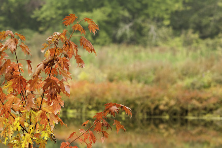 bordering: Colorful foliage bordering both banks of Blackstone River