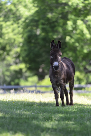 Donkey pricks up its ears at unexpected commotion Banco de Imagens - 72285884