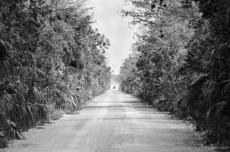 Shimmering heat waves and dust raised by oncoming truck on dirt road in Big Cypress National Preserve