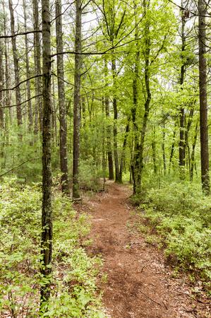 Path through Shoolman Preserve in Rochester, Massachusetts