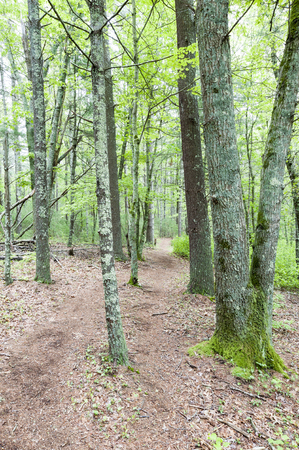 Trail through Shoolman Preserve in Rochester, Massachusetts Stock Photo