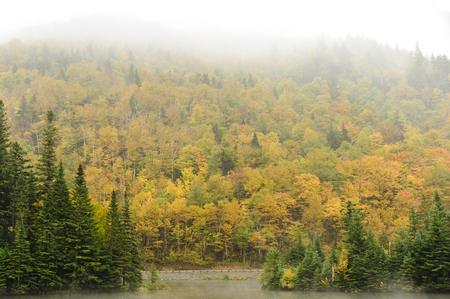 Misty day along Route 26 near Dixville Notch, New Hampshire