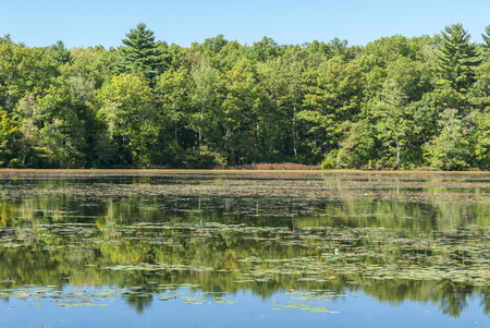 The end of summer on a leach pond in Borderland State Park
