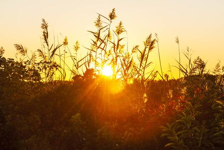 Rising sun blasting light through coastal plant life at Allens Pond Wildlife Sanctuary