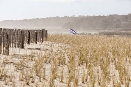 Shark warning flag waving over Nauset Beach dune protected by American beachgrass and erosion fence Stock fotó