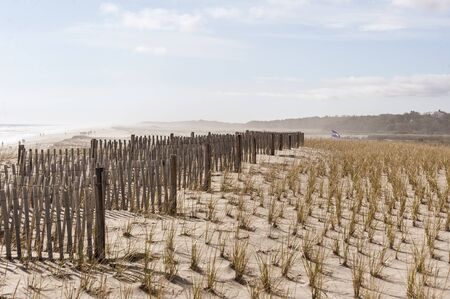 Beachgoers strung out along stretch of Nauset Beach fading into mist beyond dune protected by American beachgrass and erosion fence
